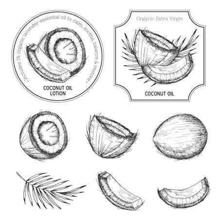 Hand drawn coconut set. Vintage labels, badges, stamps. Retro sketch style vector tropical food illustration.