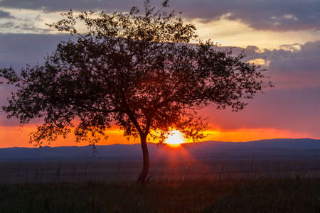 Photo pour Lonely tree at sunrise in a meadow - image libre de droit