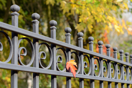 Photo pour Beautiful wrought fence. Image of a decorative cast iron fence. metal fence close up. Metal Forged Fence. Abstract autumn backgrounds. - image libre de droit