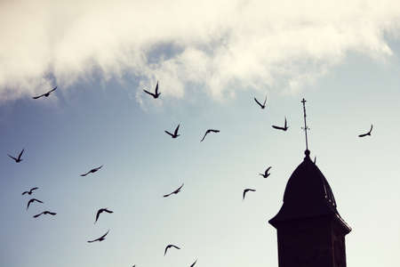 silhouette of european style architecture and birds