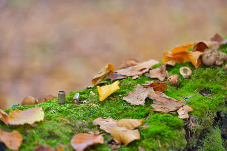 Bullet casings strewn on forest floor close up, autumn colors