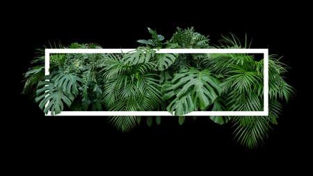 Foto de Tropical leaves foliage jungle plant bush nature backdrop with white frame on black background. - Imagen libre de derechos