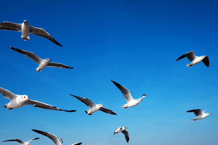Photo for The seagull is flying in the sky with day light - Royalty Free Image
