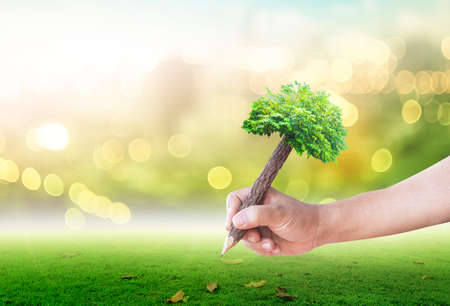 Photo pour Teacher day concept: Student hand holding pencil of tree and writing on green meadow over blurred forest background - image libre de droit
