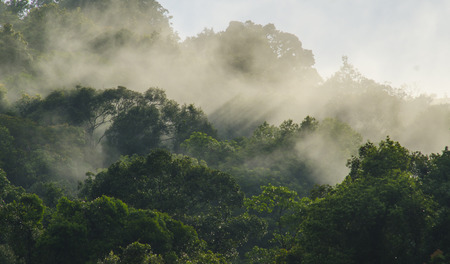Rainforests filled with steam and moisture, Khao Yai National Park