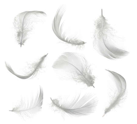 Collection of white feather isolated on white background