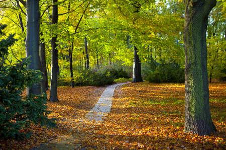 The beautiful Tiergarten in Berlin Germany.