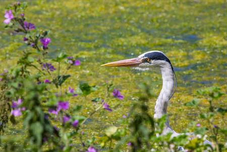 A Heron in the beautiful surroundings