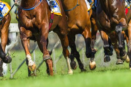 Photo pour Horse racing animals  legs hoofs closeup track action photo - image libre de droit