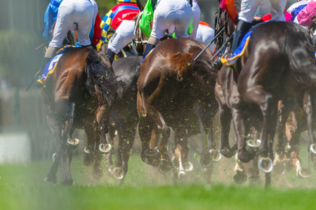 Photo pour Race horses racing pounding grass track rear photo of legs hoofs metal shoes of animals. - image libre de droit