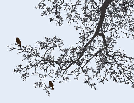 Illustration for Vector image of a branch of deciduous tree in spring - Royalty Free Image