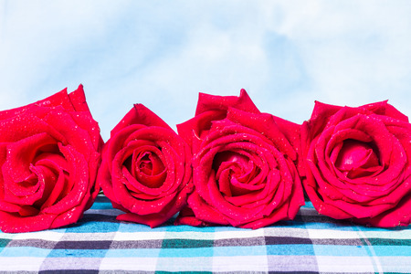 Natural red roses with water drops