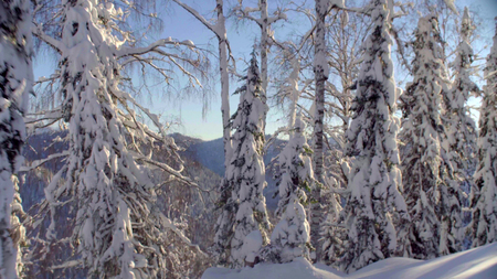 Photo for View of the winter forest in the Siberian mountains - Royalty Free Image