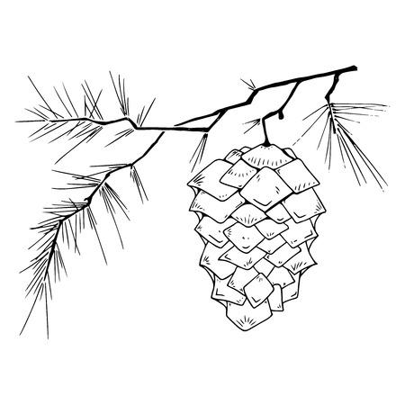 Illustration pour Fir-tree branch with a cone. Vector illustration of a pine cone on a pine branch. Fir-tree branch with a cone hand drawn. - image libre de droit