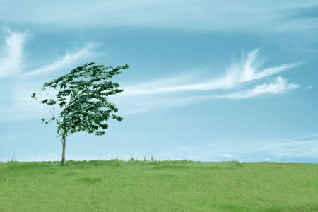 small tree in the wind with sky