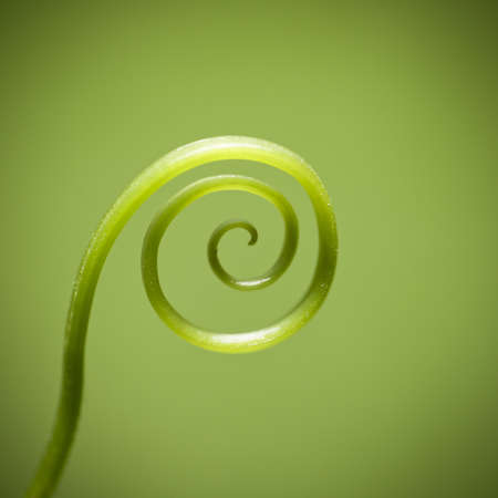 curly twig against green background,details of the nature