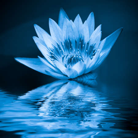 Photo pour blue lotus in the water - image libre de droit