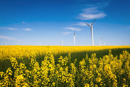 Photo pour wind farm and beautiful rapeseed flower in bloom with a clear sky - image libre de droit