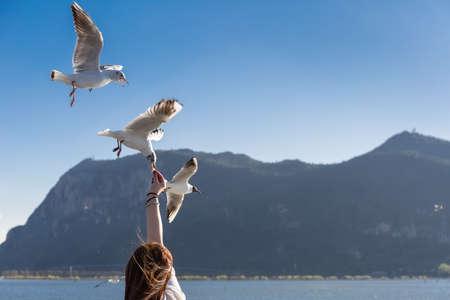 Photo pour feeding seagulls in dianchi lake, kunming, yunnan, China - image libre de droit