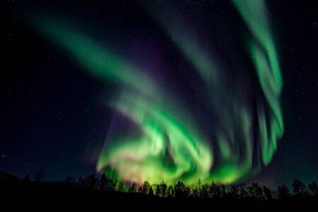 Photo pour Intense northern lights, Aurora Borealis, over a forest near Lakselv, Porsanger, Finnmark, Norway Europe - image libre de droit