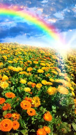 Photo pour Multicolored flower meadow and rainbow landscape. - image libre de droit