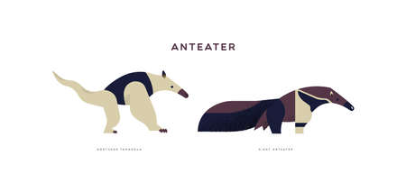 Illustration pour Wild anteater animal illustration on isolated white background. Educational wildlife set with fauna species name label. - image libre de droit