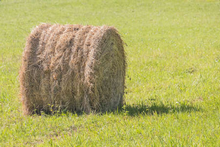 freshly wheel shaped haystack recently harvested in a grass field