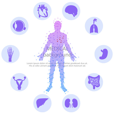 Illustration pour Medical background. Human anatomy. - image libre de droit
