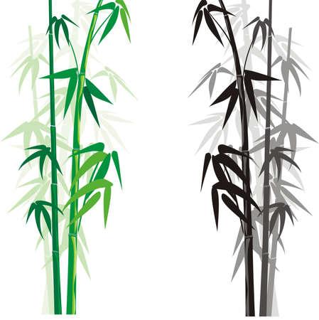 Illustration pour bamboo (bambusa) - image libre de droit