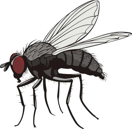 Ilustración de housefly - Imagen libre de derechos