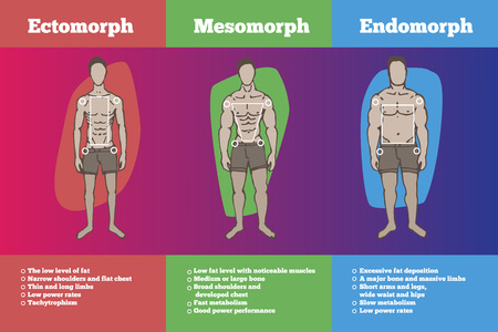 Illustration pour men body types diagram with three somatotypes - image libre de droit