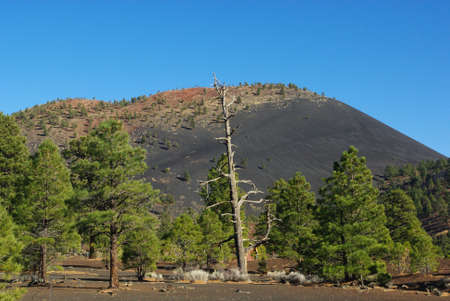 Dry tree, forest, lava mountain and blue sky, Sunset Crater Volcano National Monument, Arizona