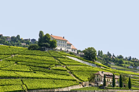 Vineyards on the Lake Geneva