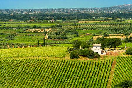 Foto de Rural landscape near Velletri, Rome, Lazio, Italy, at summer, with vines and olive trees - Imagen libre de derechos
