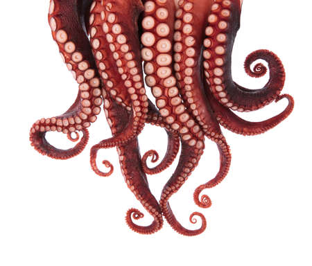 Photo for tentacles of octopus isolated on white background - Royalty Free Image