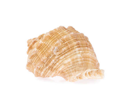 Foto de beautiful sea shell isolated on white background - Imagen libre de derechos