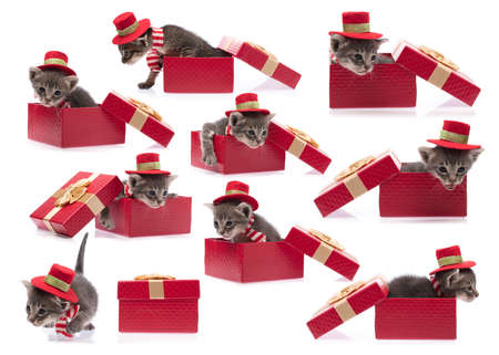 Photo pour collection of cute cat in red christmas hat with gift box isolated on white background. - image libre de droit