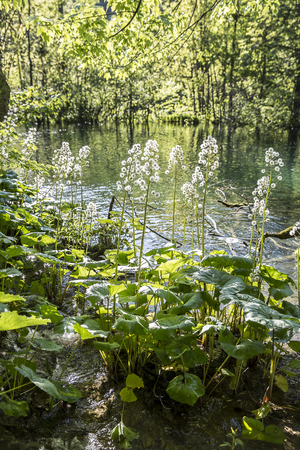 beautiful nature at  with close up on the vegetation at Plitvice Lakes National Park, Croatia