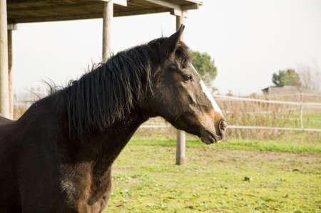Foto per Cavallo - Immagine Royalty Free