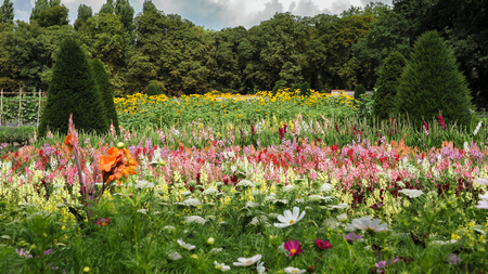flower bed with different colors and flowers (Helianthus sp., Rudbeckia sp., Gldaiolu sp., Linaria sp., Daucus sp.) in summer