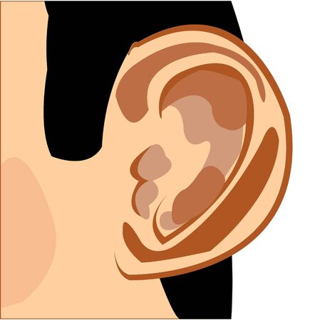 Organ of the rumour of the person ear