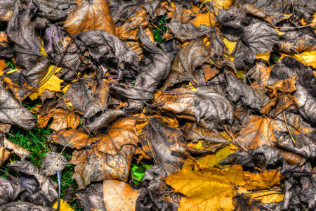 Background of a layer of beautiful Autumn Leaves in HDR High Dynamic Range