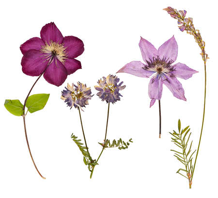 Foto de Set of wild dry pressed flowers and leaves, isolated - Imagen libre de derechos