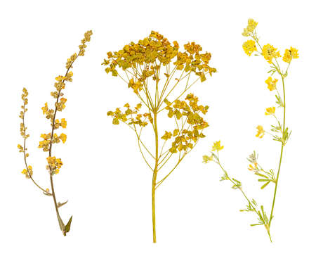 Photo for Set of herbarium wild dry pressed flowers and leaves, isolated - Royalty Free Image