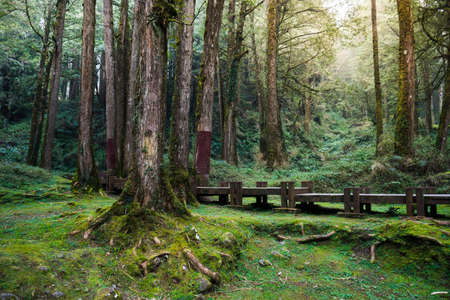 A wood path in Alishan National Scenic Area, Chiayi Province, Taiwan