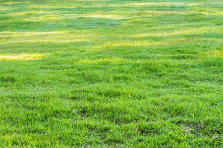 Photo pour image of grass field with dew drop on morning time. - image libre de droit