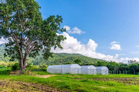 Foto de image of white insect protection tent in smart farm near green mountain. - Imagen libre de derechos