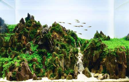 Photo pour close up image of landscape nature style aquarium tank with a variety of aquatic plants inside. - image libre de droit