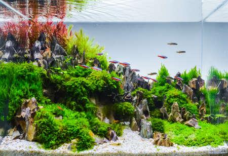 Photo pour close up image of underwater landscape nature style aquarium tank with a variety of aquatic plants inside. - image libre de droit