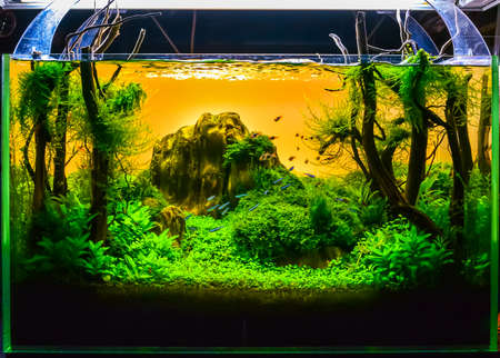 Photo for close up image of underwater landscape nature style aquarium tank with a variety of aquatic plants inside. - Royalty Free Image